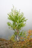 krańcowej mgły mały drzewo obrazy stock