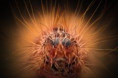 Krańcowy powiekszanie - Czerwony Caterpillar przewodzi obrazy stock