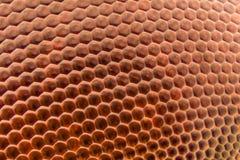 Krańcowy powiekszanie - Dragonfly dwuczłonowego oka tekstura przy 20x Obraz Stock