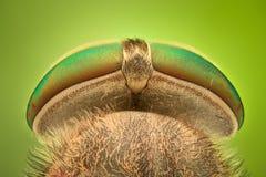 Krańcowy powiekszanie - Horsefly obrazy stock