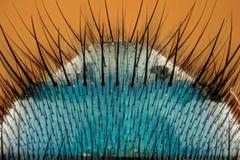 Krańcowy powiekszanie - komarnicy ciało obraz stock