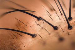 Krańcowy powiekszanie - komarnicy twarzy szczegóły przy 20x Zdjęcie Royalty Free