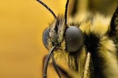Krańcowy powiekszanie - motyl głowa zdjęcie stock