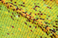 Krańcowy powiekszanie - motyla skrzydło pod mikroskopem Obrazy Stock