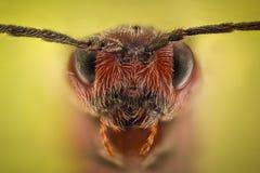 Krańcowy powiekszanie - mrówki królowej portret obrazy royalty free