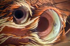 Krańcowy powiekszanie - Skaczący pająka ono przygląda się przy 20x Zdjęcie Royalty Free