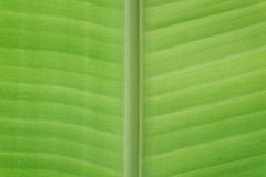 Krańcowy zakończenie zieleni tło Zdjęcia Stock