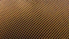 Krańcowy powiekszanie - komarnicy oko przy 20x Obrazy Stock