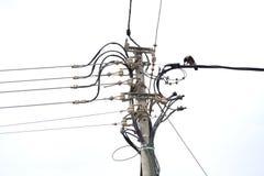Kraai als electritian Stock Afbeeldingen