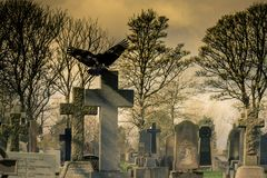 Kraai in een Begraafplaats Stock Foto