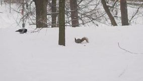 Kraai en Eekhoorn Eekhoorn en kraai in de winter stock videobeelden