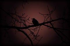 Kraai op tak bij nacht Royalty-vrije Stock Afbeeldingen