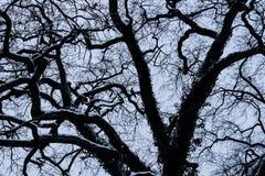 Kraai van de takken de donkere boom Royalty-vrije Stock Afbeeldingen
