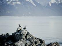 Kraaien op een rots Royalty-vrije Stock Fotografie