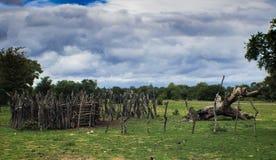 Kraal del bestiame dell'Africa fotografia stock