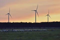 Kraanvogels die aan Zweden aankomen Stock Fotografie