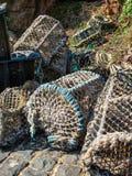 Krabów oklepowie w schronieniu Sark wyspa Obrazy Stock
