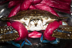 Krab Obrazy Royalty Free