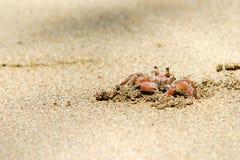 krab obrazy stock
