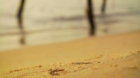 Krab bij het werk het graven op een zandig strand stock video