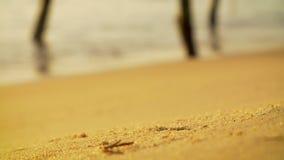 Krab bij het werk het graven op een zandig strand stock videobeelden