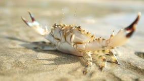 Krab bij tropisch oceaanstrand stock videobeelden