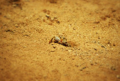 Krab blisko grzebie Fotografia Royalty Free