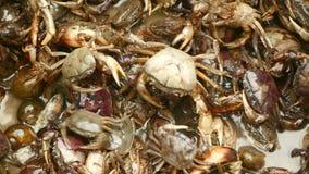Krab, crabbing, krabben, krabjager, krabseizoen, stock videobeelden