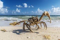 Krab in Cuba stock foto's