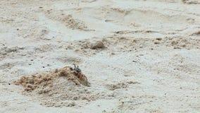 Krab die een gat graven stock video