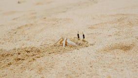 Krab die een gat in zand maken stock videobeelden