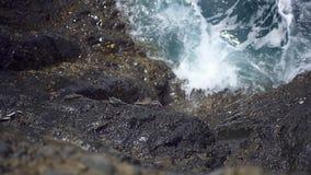 Krab die op de steenkust kruipen stock video