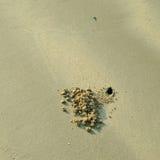 Krab dziura w piasku Fotografia Stock