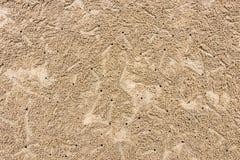 Krab dziury na plażowym piasku fotografia stock