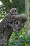 Krab-eet macaque op draakstandbeeld Stock Afbeeldingen
