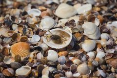 Krab en shells op de kust royalty-vrije stock afbeeldingen