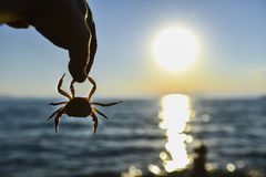 Krab en sunrises stock afbeeldingen