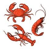 Krab, garnela, homar Owoce morza zdjęcia stock