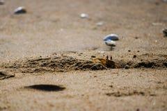 Krab in het strand stock afbeelding