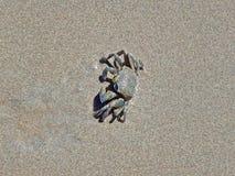 Krab in het zand op de Seychellen half wordt begraven die stock afbeelding
