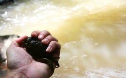 Krab holded ręką Obraz Stock