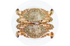 Krab (koński krab) wewnątrz odizolowywa na bielu Obrazy Royalty Free
