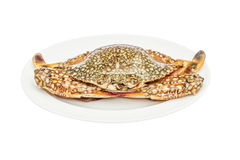 Krab (koński krab) wewnątrz odizolowywa na bielu Zdjęcia Stock