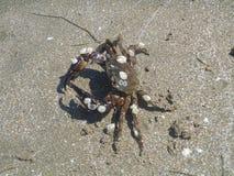 Krab na piasku Obraz Stock