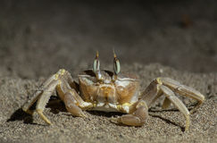 Krab na piasku Obrazy Royalty Free