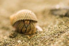 Krab na piasku zdjęcia stock