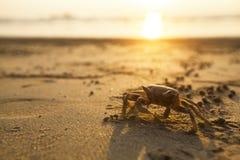 Krab na piasku denna plaża azjaci obraz royalty free