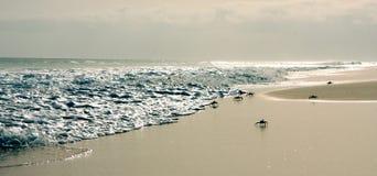 krab na plaży zdjęcie royalty free