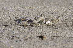 Krab na plaży fotografia stock