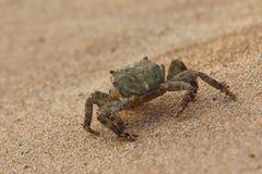 krab na plaży Obraz Royalty Free